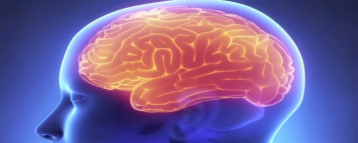 hippocampus memory jhm video